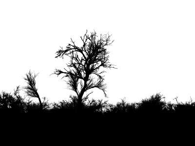 恐怖的森林背景