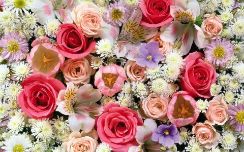 鲜花背景高清背景图片素材下载