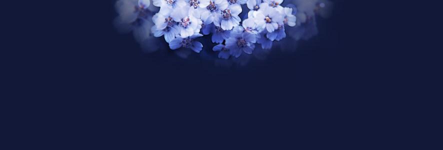 梦幻花朵背景banner