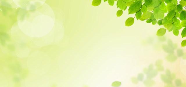 小清新春天绿叶背景