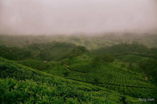 茶高清背景背景高清大图-高清背景自然/风光