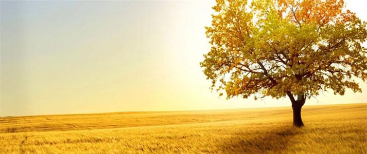 夕阳暖色海报背景