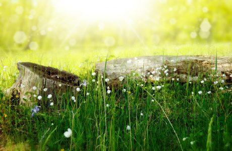 草地高清背景
