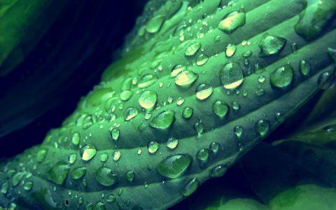 绿叶背景高清背景图片素材下载