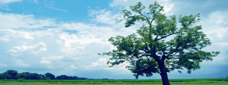 森林树背景图