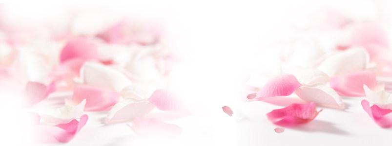 美丽女人花瓣背景