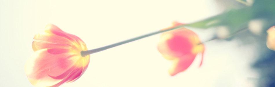 唯美花朵海报背景高清背景图片素材下载