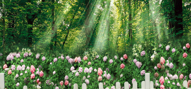森林花园高清背景图片素材下载