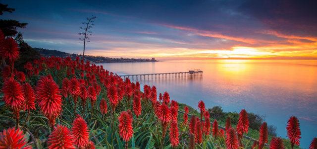 夕阳大海鲜花背景