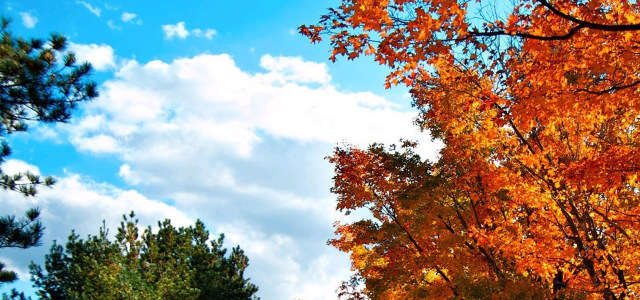 蓝天白云树林背景