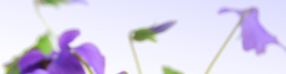 教师节鲜花背景banner创意设计
