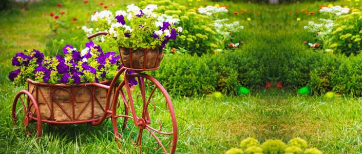 花园中满载花朵的自行车摄影海报背景高清背景图片素材下载