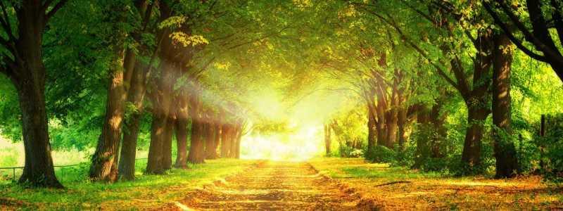 梦幻森林背景
