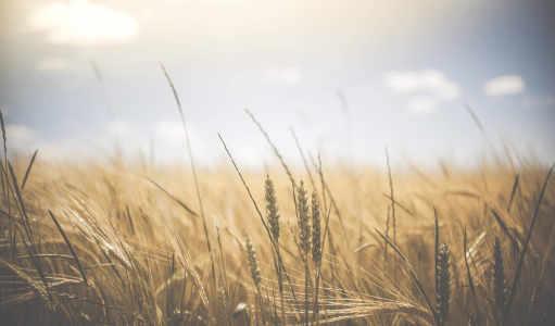 农场高清背景高清背景图片素材下载