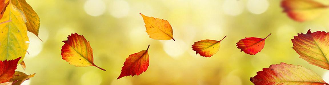 秋天落叶梦幻光斑背景