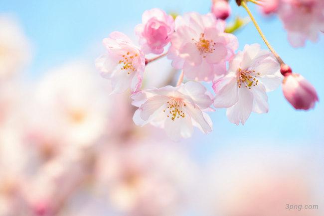 春天桃花背景背景高清大图-桃花背景淡雅/清新/唯美