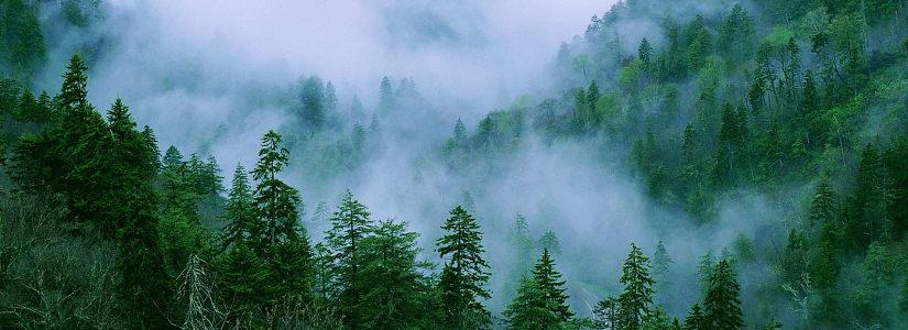 森林树林清新背景banner