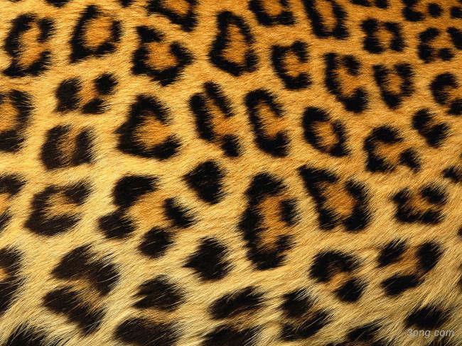 动物皮毛纹理高清背景背景高清大图-纹理背景底纹/肌理
