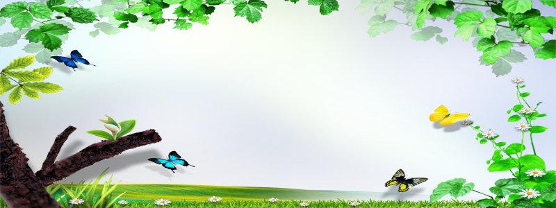 蝴蝶春天绿色背景