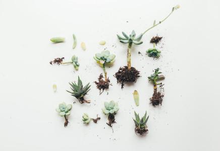 多肉植物摆拍高清背景图片素材下载
