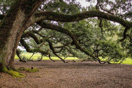 树、树林、风景