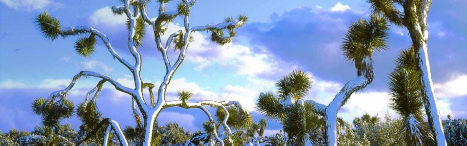 松树雪景摄影banner壁纸