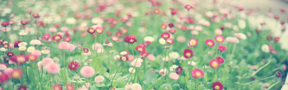 小清新花朵海报背景