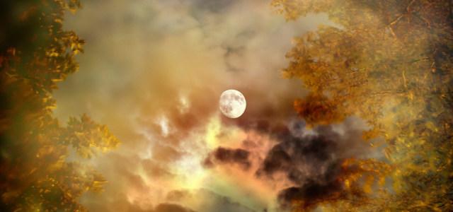 月亮树林背景
