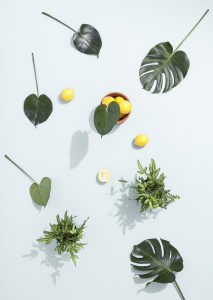 植物叶子俯拍背景高清背景图片素材下载