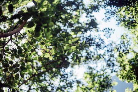清新树叶背景高清背景图片素材下载