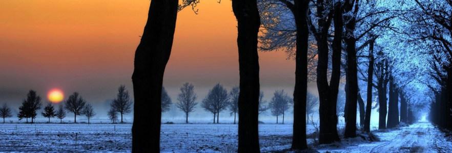 树林冬季雪景夕阳背景banner