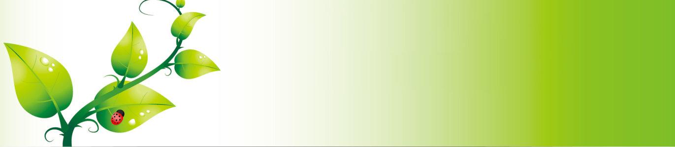 卡通藤蔓树叶清新背景banner高清背景图片素材下载