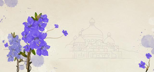 浪漫紫色花朵背景