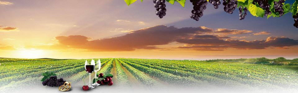 唯美葡萄酒庄园海报背景高清背景图片素材下载