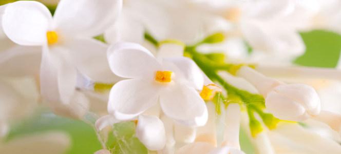 简约唯美白色花朵浅色背景海报背景高清背景图片素材下载