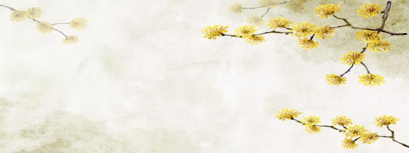 清新菊花背景