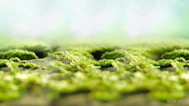 绿色清新背景背景高清大图-清新背景底纹/肌理
