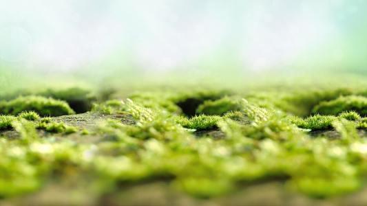 绿色清新背景高清背景图片素材下载