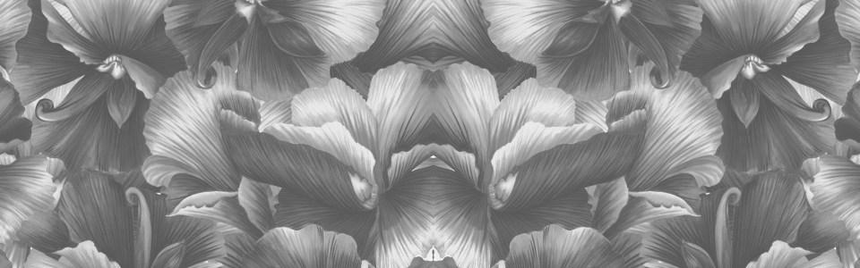 黑白质感花朵海报背景高清背景图片素材下载