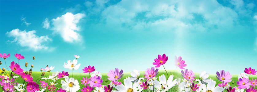 天空花朵背景图