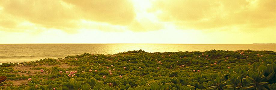 自然背景高清背景图片素材下载