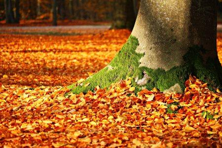 秋天的树叶背景