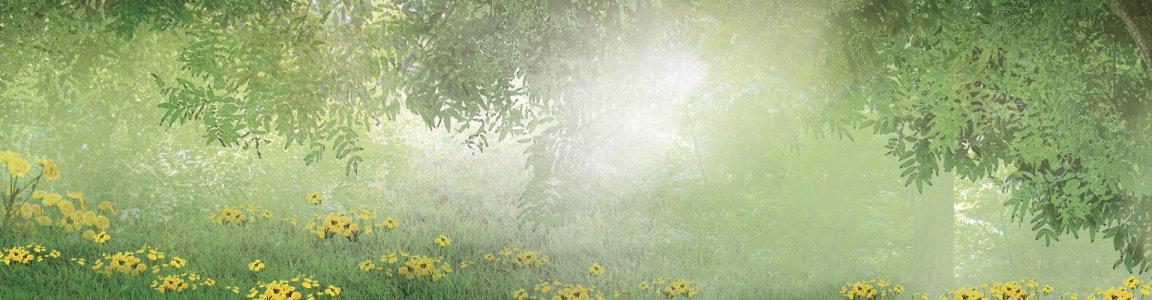 树林花朵背景