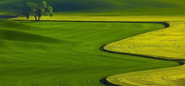 绿色草原背景