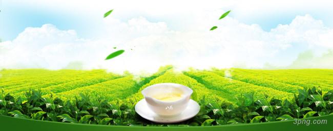春茶banner海报背景背景高清大图-春茶背景底纹/肌理