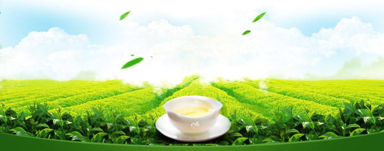 春茶banner海报背景