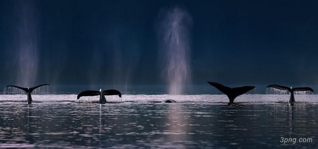 大海上的海豚背景高清大图-海豚背景自然/风光