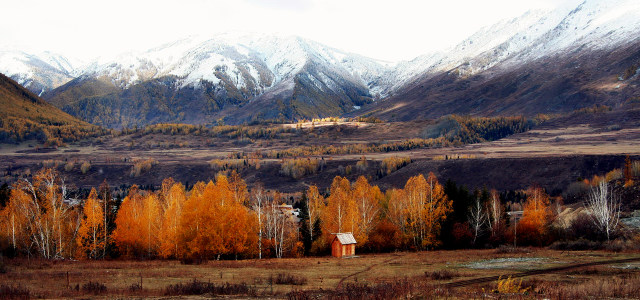 新疆雪山白桦林秋天风景