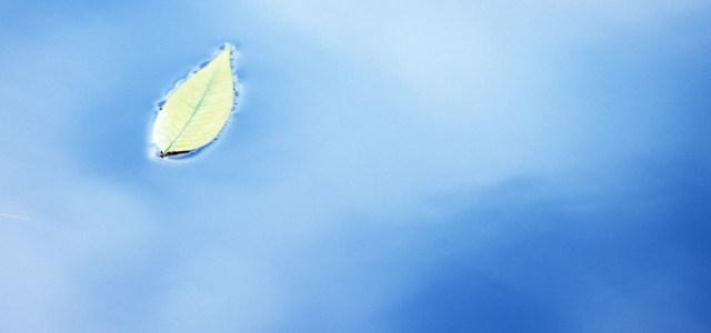 绿叶温馨简约夏季背景高清背景图片素材下载