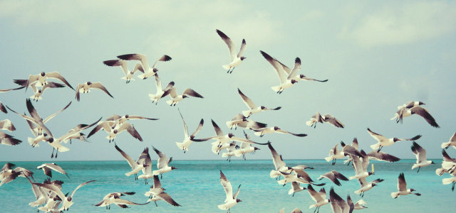 天空大海海鸥背景